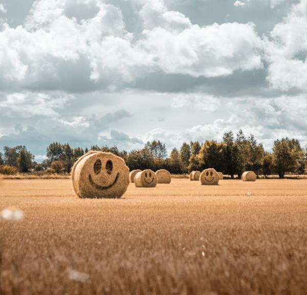 Smiling hay stacks on Fyn, Denmark